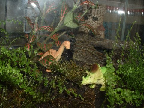 The Dinosaurs Who Live In The Terrarium